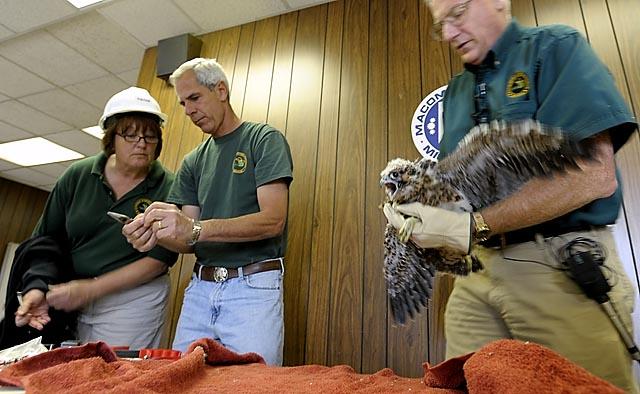 Macomb County names peregrine falcon chicks